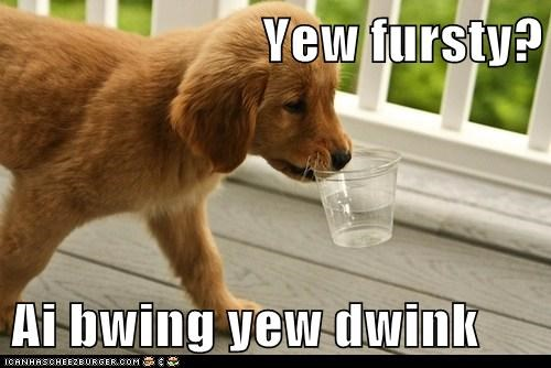 cyoot dogs funny golden retriever puppy - 5946781440
