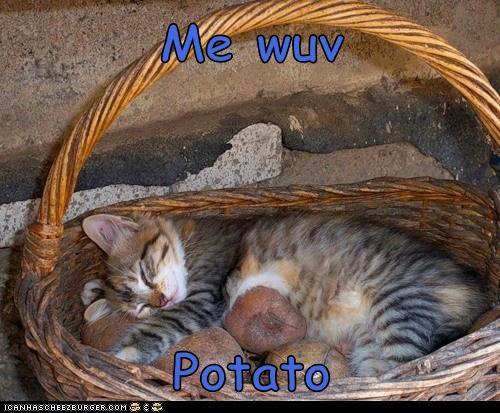 Cheezburger Image 5947041280
