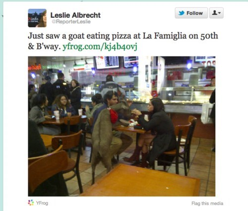 Invalid Argument,Pizza-eating goat