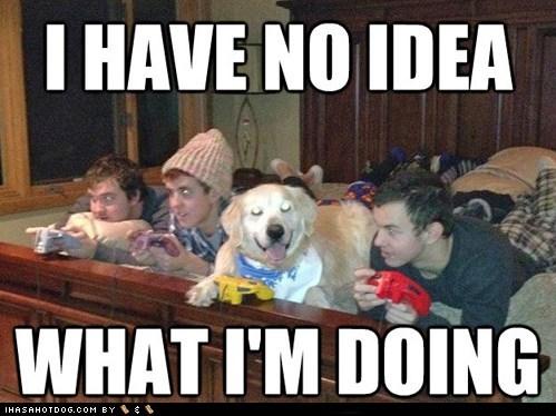 dogs,funny,golden retriever