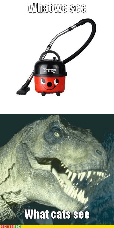 Cats,the internets,t rex,vacuum cleaner