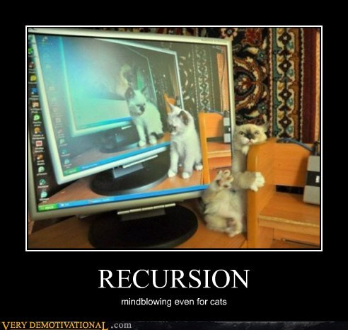 Cats,hilarious,mind blowing,recursion