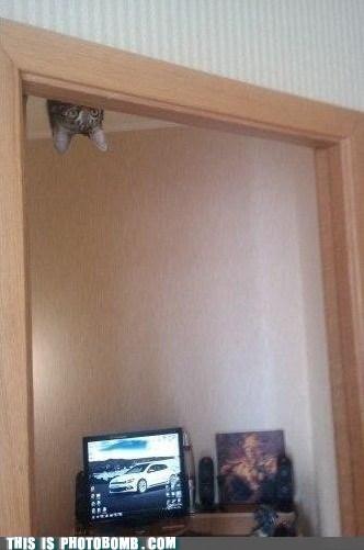 animal Animal Bomb best of week cat play SOON - 5949024512