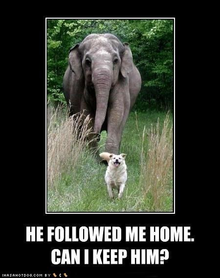 animal,demotivation,dogs,elephant,funny