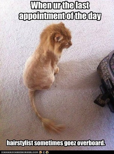 appointment cat goes hairstylist last lion mane overboard shaved
