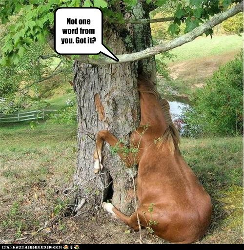 embarassing head horse stuck trapped tree