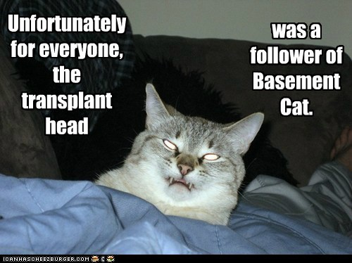 basement cat,follower,head,transplant,unfortunately