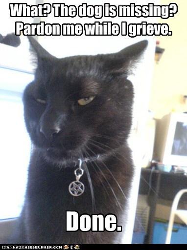 cat evil lolcat Sad - 5950352896