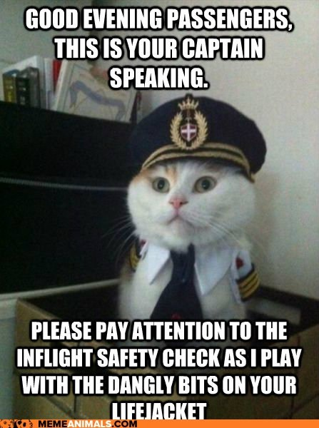 attention seeker,bits,Captain Kitteh,check,dangly,good evening,lifejacket,passengers,pay,play,safety,speaking