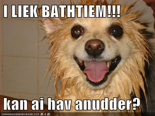 bath bath time dogs funny what breed - 5950987264