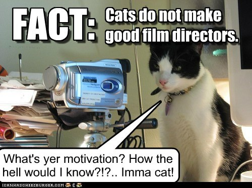 Cats do not make good film directors. FACT: What's yer motivation? How the hell would I know?!?.. Imma cat! FACT: Cats do not make good film directors.