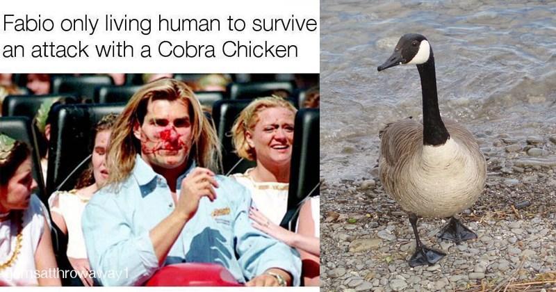 bird memes birb trending memes canadian goose canadian geese animal memes cobra chicken funny animals birds geese funny birds - 5951493