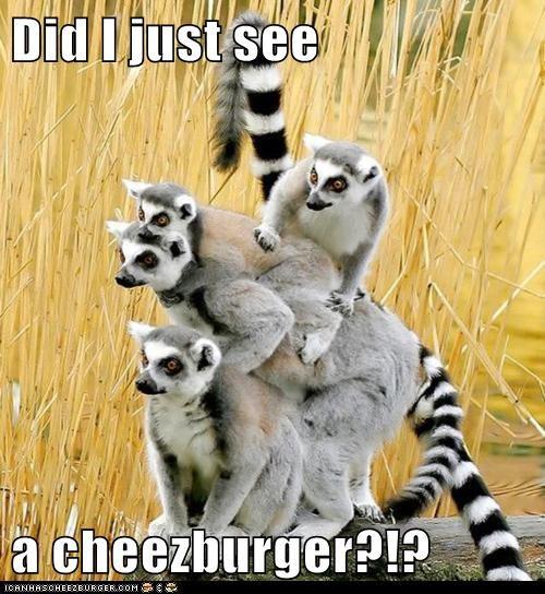 Cheezburger Image 5953027072