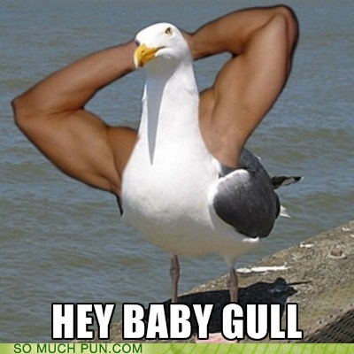 dat ass guido gull hey girl literalism meathead muscles seagull shoop similar sounding smarmy - 5953284352
