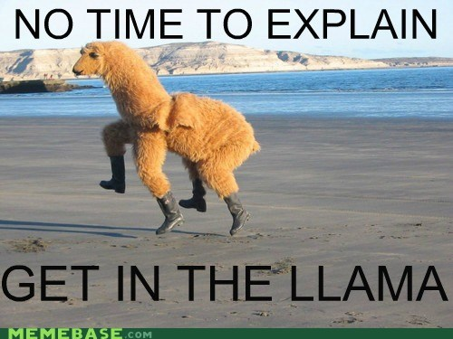 back,get in the car,llama,Memes,no time to explain