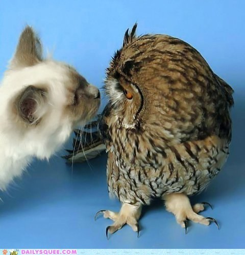 cat,Interspecies Love,Owl,sniff,who