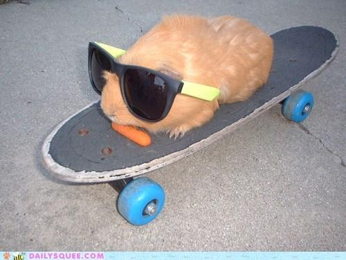 carrot,guinea pig,skateboard
