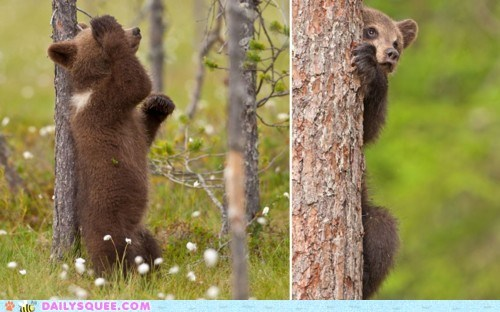 bear,cub,hide,hide and seek,play,tree