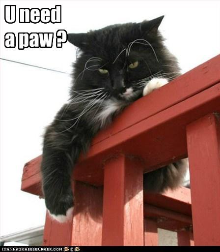 U need a paw ?