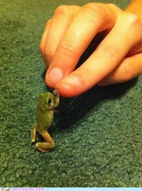 bro finger frog hand high five - 5954129152