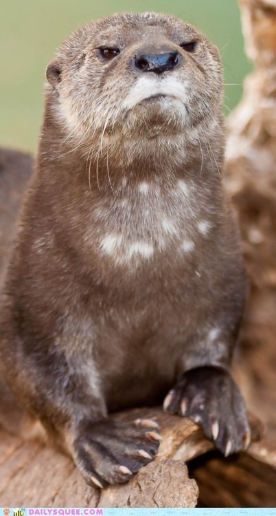 disapproving face otter serious stern
