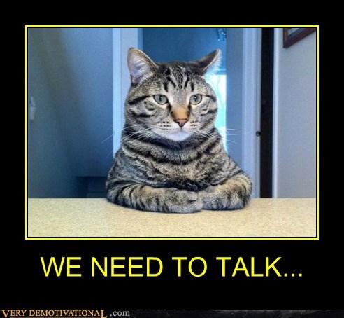 cat hilarious talk wtf