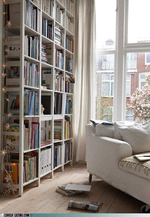 bookcase light shelves window