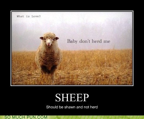 lolwut nonsensical non sequitur sheep strange - 5955132416