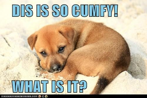 DIS IS SO CUMFY! WHAT IS IT?