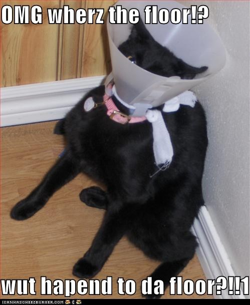 cant classics cone of shame confused floor location see seeing sight vision where - 5955506688