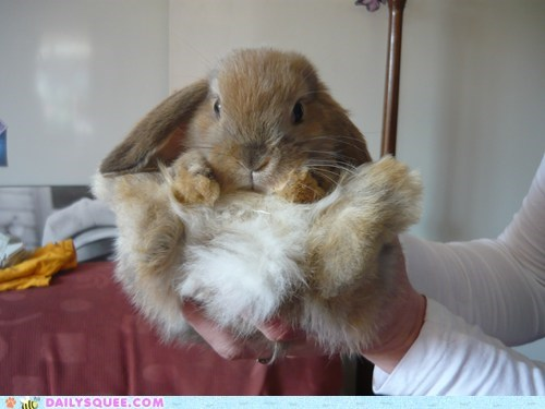 bunny fur happy bunday - 5956034560