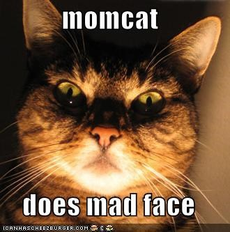momcat does mad face - Cheezburger - Funny Memes | Funny Pictures
