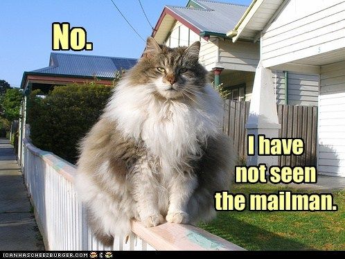 best of the week,captions,cat,Cats,chubby,eat,fat,lolcats,mail,mailman,no,post