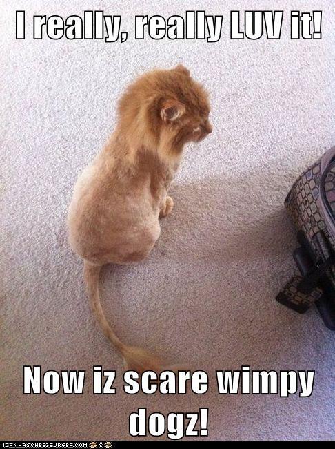 I really, really LUV it! Now iz scare wimpy dogz!