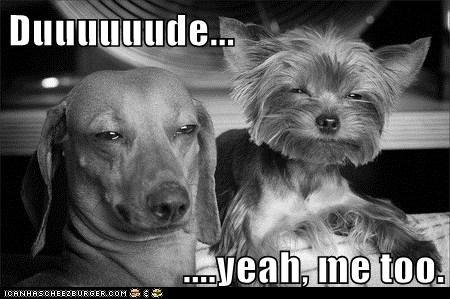 daschund dogs funny yorkshire terrier - 5958808576