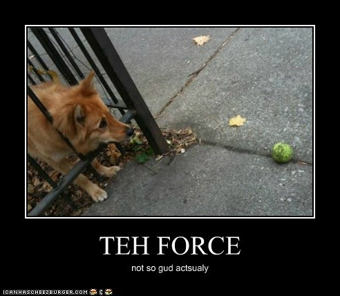 demotivational dogs funny what breed - 5959805952