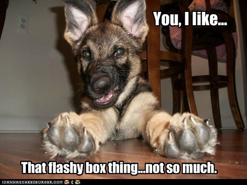 cyoot,cyoot puppy ob teh day,funny,german shepherd,puppy