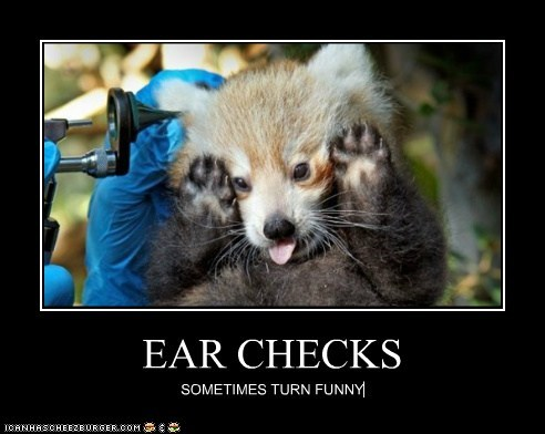 EAR CHECKS SOMETIMES TURN FUNNY