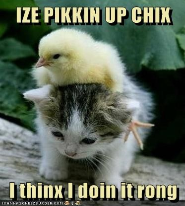 baby animals,best of the week,Cats,chick,chickens,doing it wrong,Hall of Fame,kitten,picking up chicks