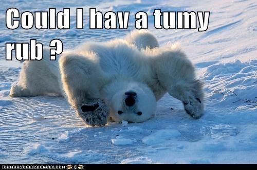 cute giant polar bear pretend puppy seems legit tummy rub - 5960257024