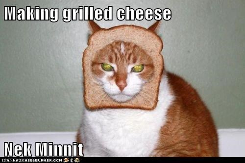 Cheezburger Image 5960422912