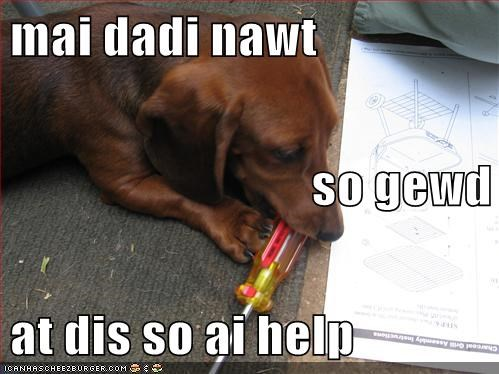daschund,dogs,funny