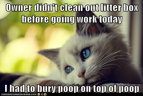 first world cat problems - 5960794624