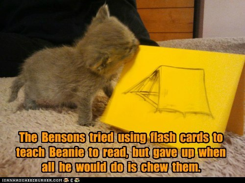 The Bensons tried using flash cards to teach Beanie to read, but gave up when all he would do is chew them.