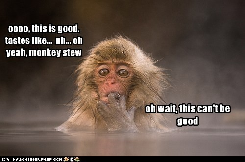 dinner,japanese macaque,monkey,not good,realization,stew,tasting