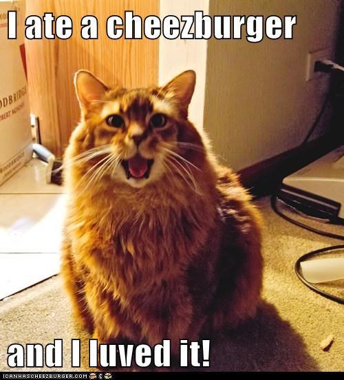 Cheezburger Image 5961480704