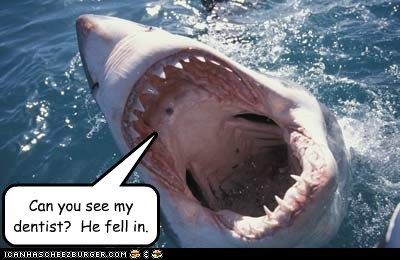 can you dentist eating people fell in see shark - 5962367232
