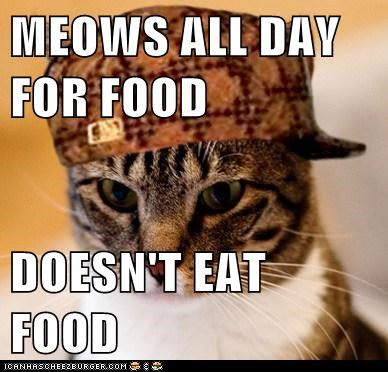 MEOWS ALL DAY FOR FOOD DOESN'T EAT FOOD