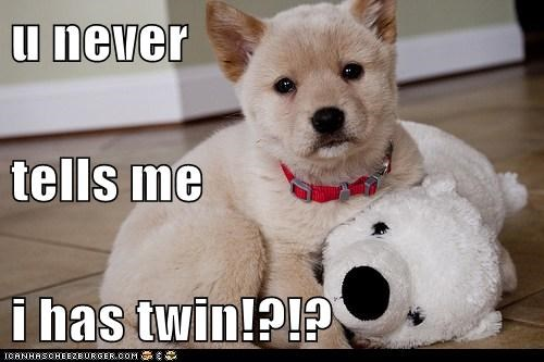 puppy,twin,what breed