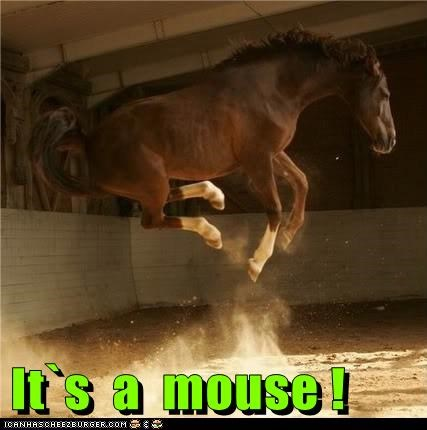 best of the week eek Hall of Fame horse jump leap mouse scarred skittish - 5962673408
